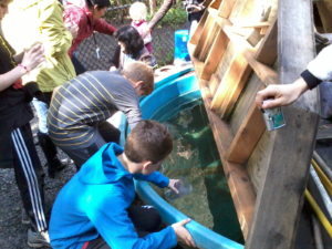 Salmon in the Classroom students deliver their fish to the Imprint Pond!