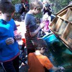 Salmon in the Classroom-release_4-7-14_II